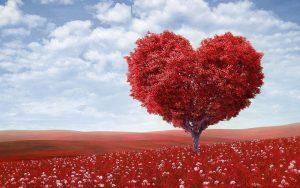 עץ לב אדום